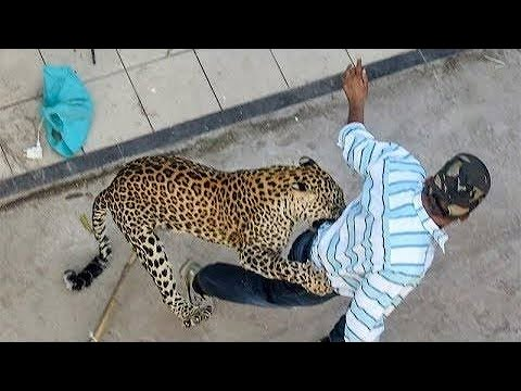 CCTV Footage of Hyderabad Leopard Trying to Attack Man | Where is leopard now? | Stay Alert SHARE