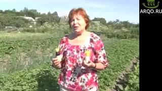 Фантастический урожай картофеля! Применяли препарат Байкал ЭМ 1(Лидер продаж нашего магазина. Способствует восстановлению почвы, увеличению урожайности и оздоровлению..., 2016-02-18T18:11:52.000Z)