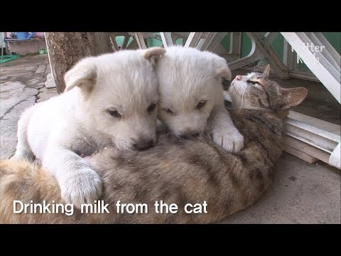 Cute Puppies' Mom Is A Cat ?! | Kritter Klub