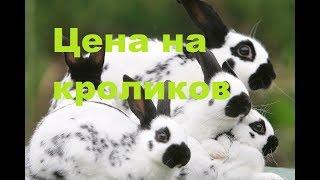 Цена на кролика. Небольшая экскурсия кроликовода.