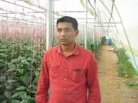 Greenhouse Experience, Gujarat (India)
