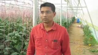 Greenhouse Experience, Gujarat (India)