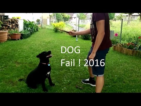 Dog Fail 2016 – Dog failed to catch stick