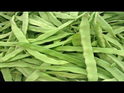 Italian Romano Green Beans/ Ejotes Romanos Italianos