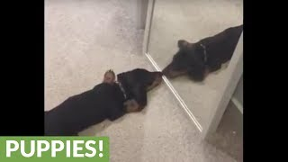 Puppy has adorable encounter with mirror reflection