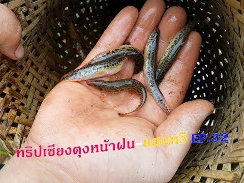 เที่ยวเชียงตุงหน้าฝน-แสนหวี EP.32 หาปลาแบบชาวนาด้วยสะล้อผีดักปลาแสนหวี Hseni Farmer Fishing Trap