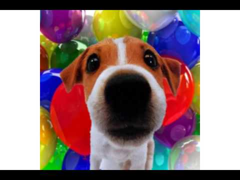 Happy Valentine's Day - Funny Video - Jack the puppy