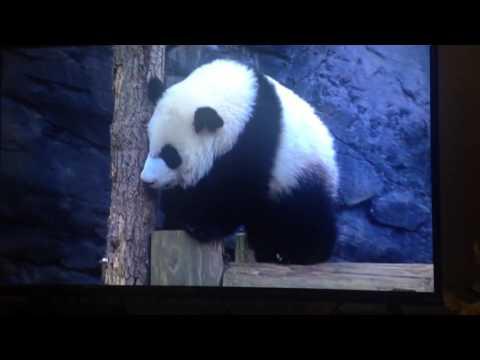 Animal Atlas Animal ABC's Alphabet Song