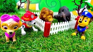 Щенячий Патруль ловит животных - Видео с игрушками из мультфильмов