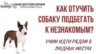 Как отучить собаку подбегать ко всем и научить идти рядом в городе и в людном месте?