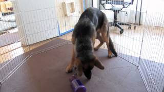 Premier Pet Busy Buddy Tug-a-Jug Review