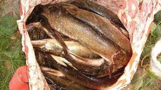 В Когалыме за 7 кг рыбы давали 5 тысяч рублей
