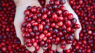 5 Health Benefits Of Cranberries