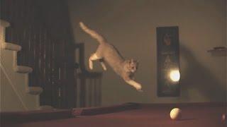 Коты прыгают Приколы с котами