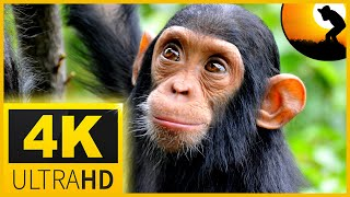 4k video ultrahd  wildlife animals 🐍🐘Beautiful nature  - with Sleep Relax Music for 4K UHD TV