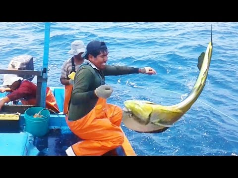 Incredible dolphinfish fishing [Full Action]