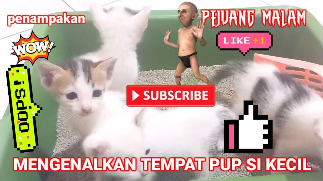 Mengenalkan Tempat Pup Si Kecil Youtube