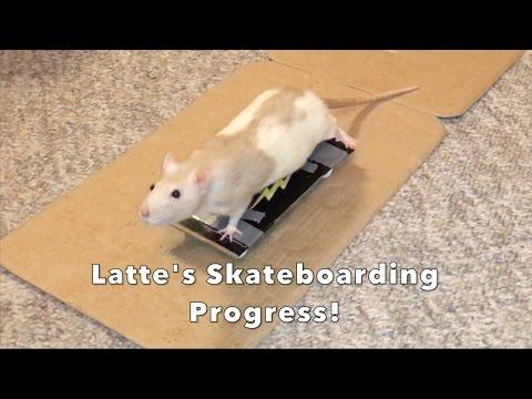 Latte Skateboarding Progress!