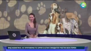Лучшая собака Америки: кто получит серебряную миску и стейк - МИР24