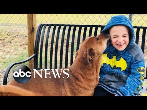 Pet Central - This 7 year old from Augusta has saved over 1400 dogs. Here's his story: