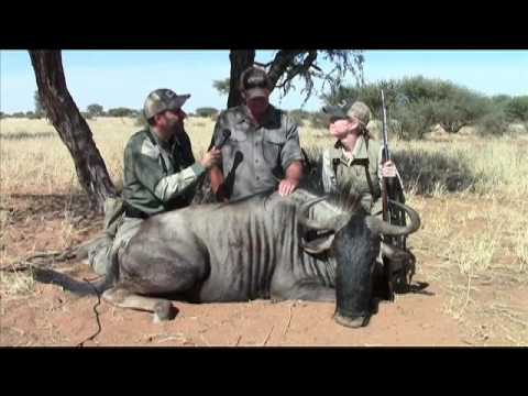 Tracking Wildebeest In Namibia