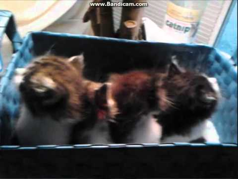 Kittens Saved During Rainy Afternoon