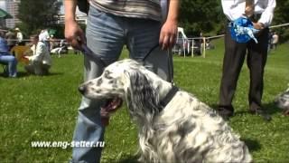 117-я Московская межрегиональная выставка охотничьих собак. Средний ринг.
