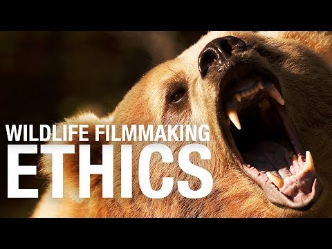 Wildlife filmmaking ETHICS - Stuff you should know