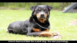 How To Train Your Rottweiler Puppy Age