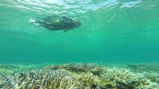 こんなに綺麗な珊瑚が見れるシュノーケルスポットがあったとは! 宮古島...