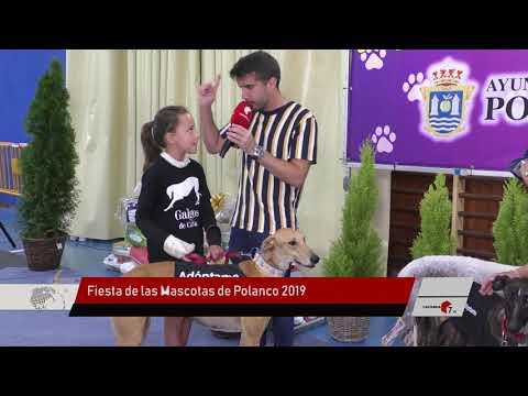 Fiesta de las Mascotas Polanco 2019