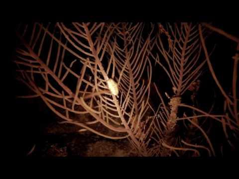 plongée de nuit à Port Louis