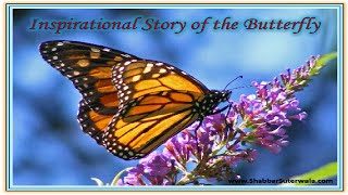 Inspirational Story of the Butterfly
