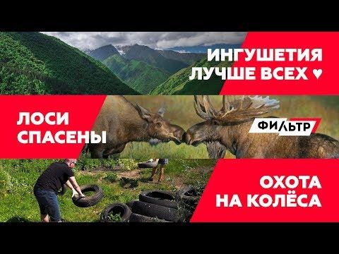 Чисто КАВКАЗ / ЗАКОН и ЛОСИ / ОХОТА на КОЛЁСА // ФИЛЬТР