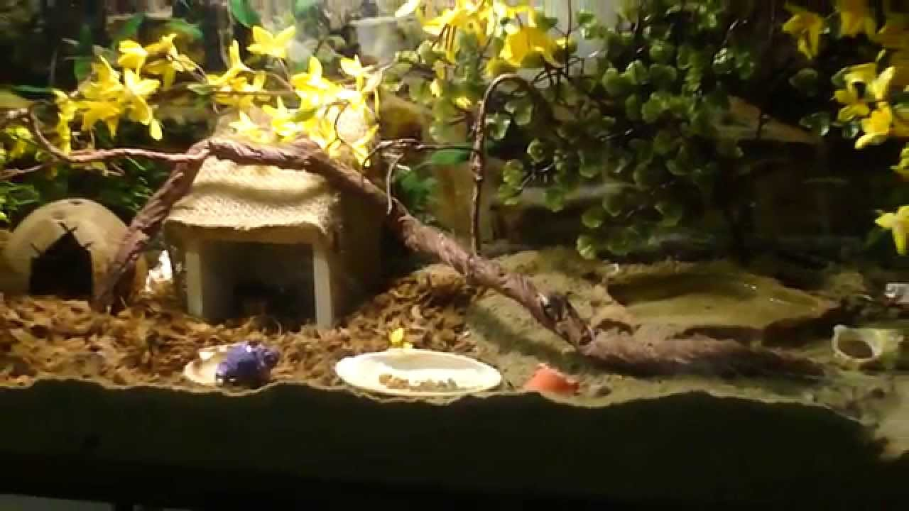Hermit Crab Tank Set Up 55 Gallon Youtube
