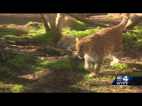 Greenville Zoo Will Soon Have New Additions