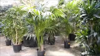 Plantscape Inc Live Plants