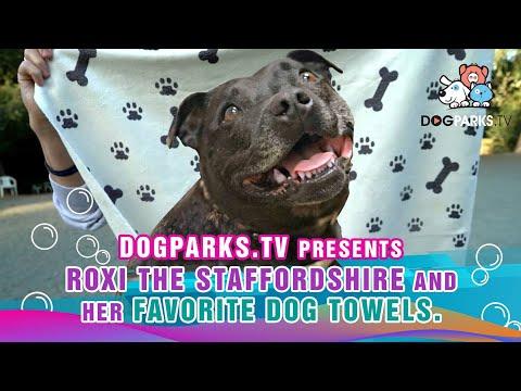 "Dogs of Dog Parks presents Roxi ""Dog Park Floozy"""