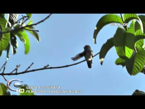 Filmadora Panasonic AG-AC7 Vídeo HD - Beija-flor