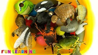 Lets Learn Colors with Wild Animals Toys For Kids