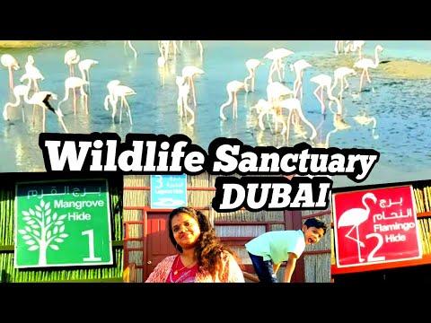 Ras Al Khor wild life sanctuary Dubai||wild life sanctuary Dubai|പക്ഷികൾക്ക് ആയി ഒരു സ്ഥലം|