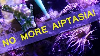 HOW I ELIMINATED AIPTASIA IN MY REEF TANK!
