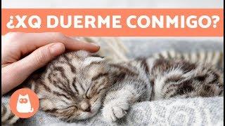¿Por qué mi gato duerme conmigo? - 5 motivos que te encantarán