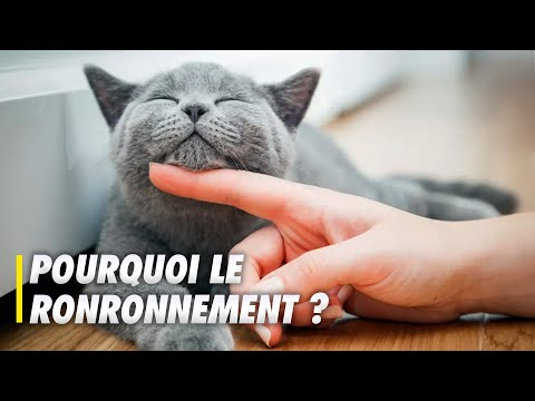 La science du ronronnement du chat - Scilabus 26