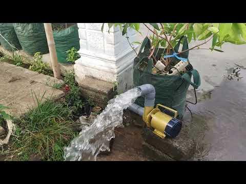 Pompa Air Kolam Ikan Koi 24 Jam - YouTube