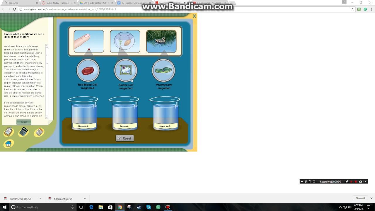 Biology GT grade 9, Osmosis Virtual Lab results