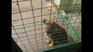 Собаки в усыпалке Минска 22.04.16. Часть 3