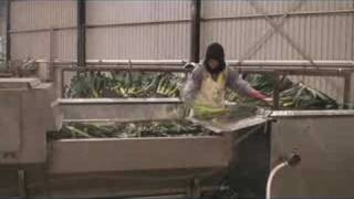 Leek Washing