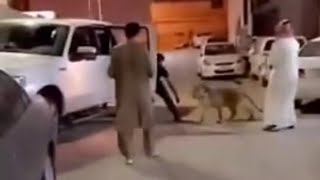 القبض على أخطر مروجي مخدرات بالرياض بحوزته أسد و11 كلباً بوليسياً لتخويف الأمن