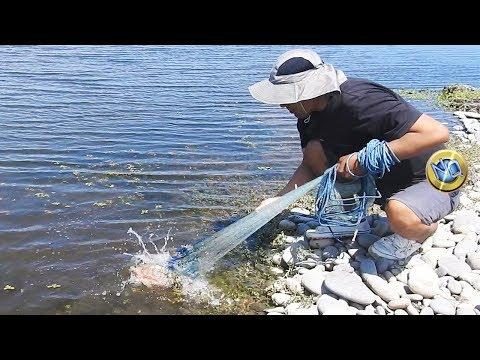 Hombre PESCADOR usa Atarraya para PESCAR Solamente TILAPIAS GRANDES